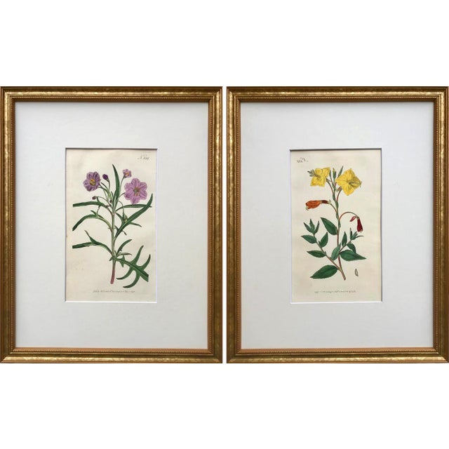 Original Antique Curtis Floral Botanical Etchings C. 1796 - a Pair For Sale In New York - Image 6 of 6