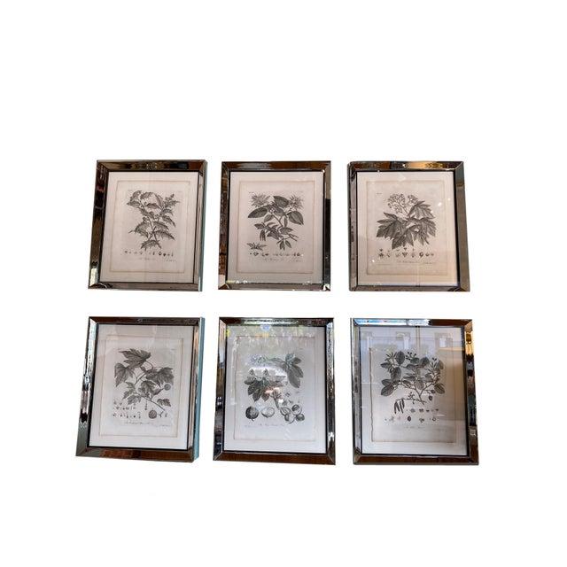 Antique White Antique Botanical Prints - Set of Six For Sale - Image 8 of 8