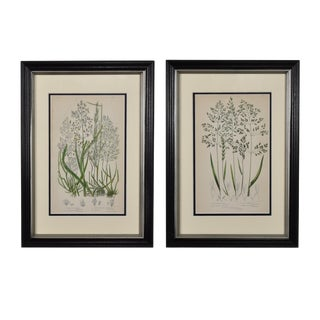 1950s Vintage Original English Botanical Grass Framed Prints - A Pair For Sale
