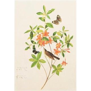 "1966 ""Swainson's Warbler"" Lithograph by John James Audubon For Sale"