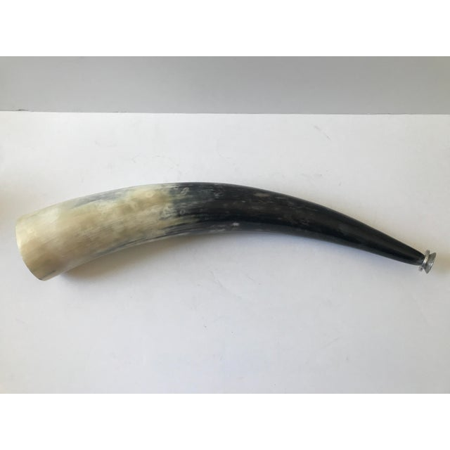 Decorative Polished Horn - Image 8 of 8