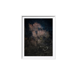 "Timothy Hogan ""Rose"" Original Framed Color Landscape Photograph, 2017 For Sale"