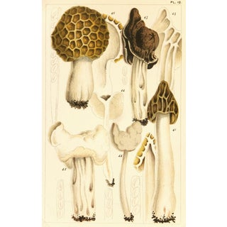 1891 British Edible Mushrooms Print For Sale