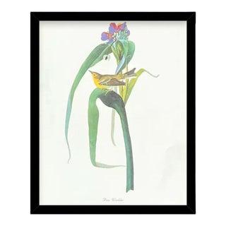 Custom Black Wood Frame of Authentic Vintage John James Audubon Pine Warbler Bird & Botanical Print For Sale