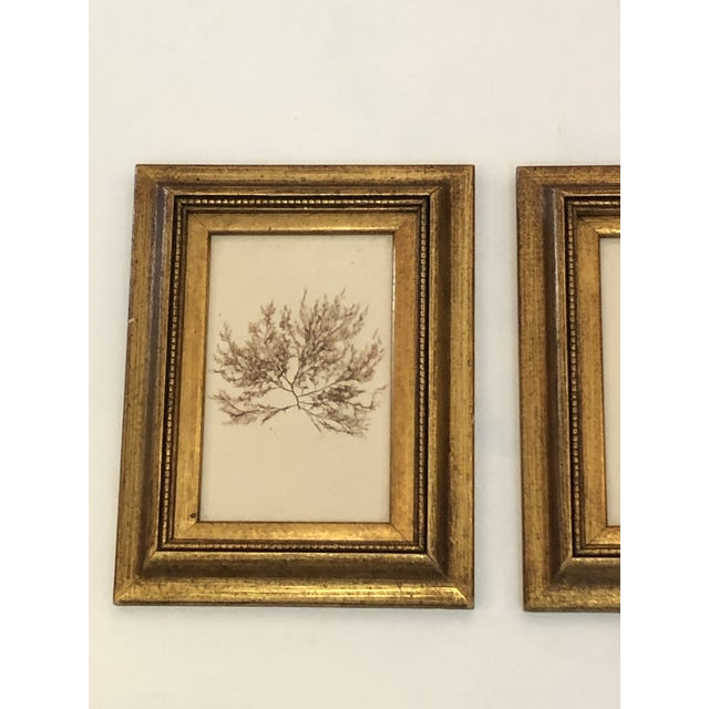 19th Century Pressed Organic Botanicals in Giltwood Frames -Set of 3 For Sale - Image 4 of 11