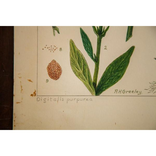 R.H. Greeley Foxglove Botanical Watercolor For Sale - Image 4 of 5