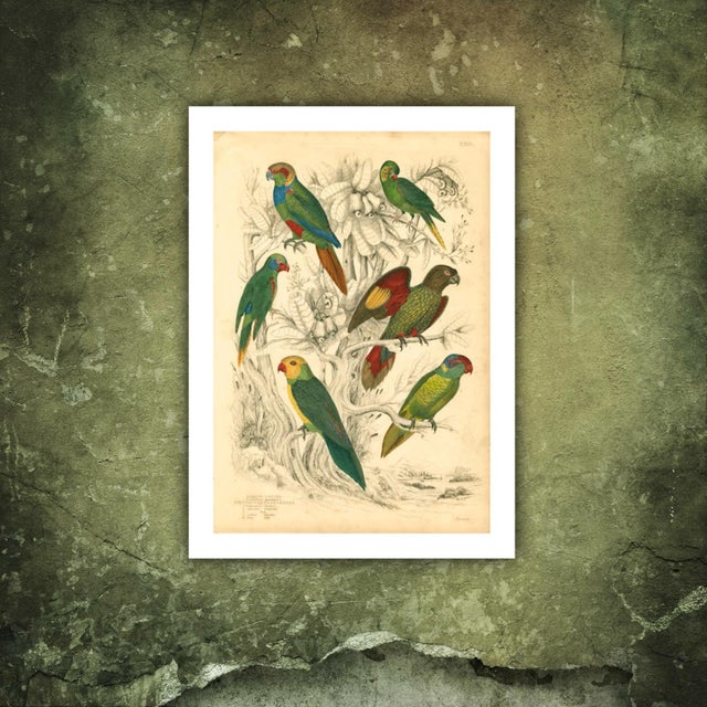 Vintage Parakeets Archival Print - Image 2 of 3