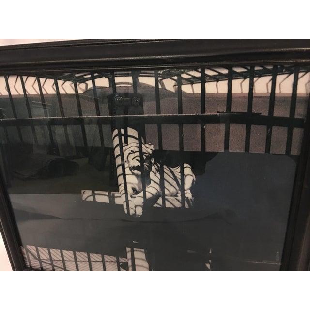 Hadassah Zuberi Lioness at the Zoo Photo - Image 3 of 5