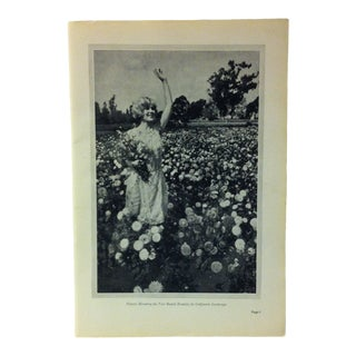 """Vintage Union Pacific System Print on Paper, """"Flowers Blooming the Year Round"""", 1926 For Sale"""