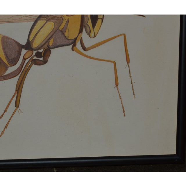 Illustration Insect Ant Pencil Paper Framed Art Still Life Painting Drawing Signed Payne For Sale - Image 3 of 12