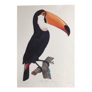 1950s Vintage the Toucan French Lithograph Print For Sale