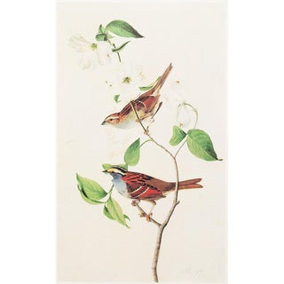 1960s Cottage Lithograph of a White-Throated Sparrow by John James Audubon For Sale