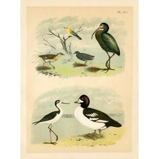North American Shorebirds, 1878 Print For Sale