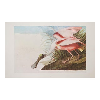 1966 Audubon Roseate Spoonbill Lithograph