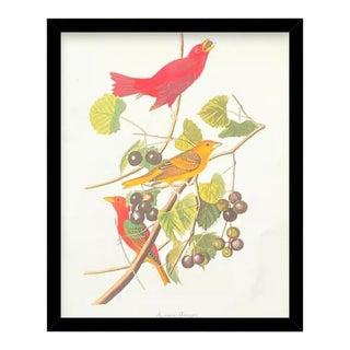 Custom Black Wood Frame of Authentic Vintage John James Audubon Summer Tanager Bird & Botanical Print For Sale
