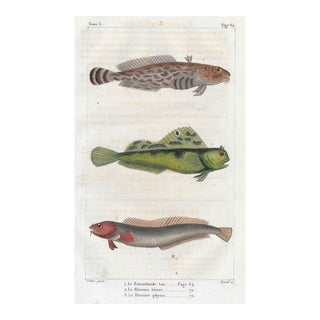 Antique French Fish Engraving For Sale