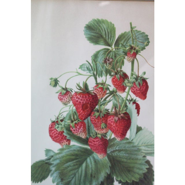 Mid 20th Century Silver Framed Strawberry Print For Sale - Image 5 of 7