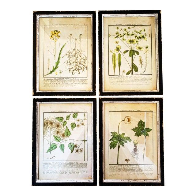 Vintage Framed French Botanical Prints Reproductions - Set of 4 For Sale