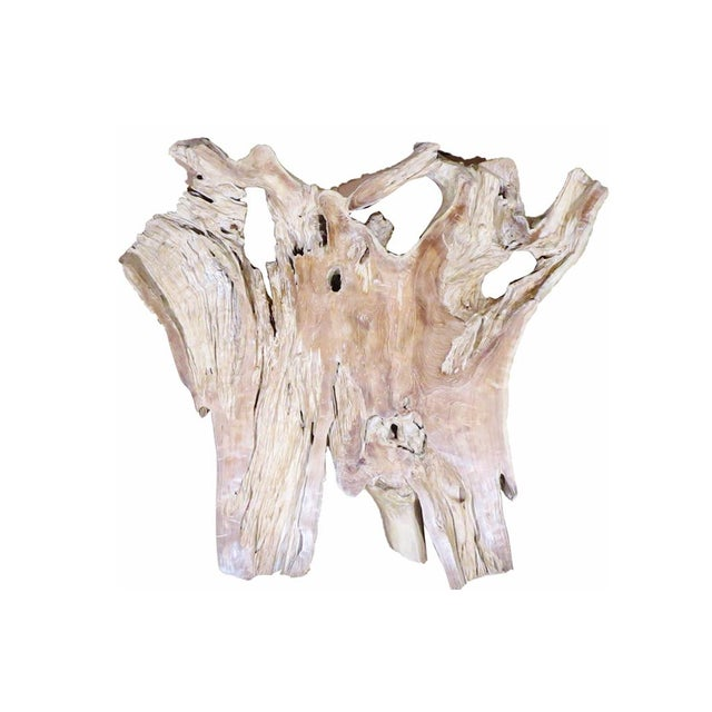 Organic Modern Natural Teak Root Sculpture For Sale - Image 4 of 7