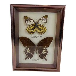 Vintage Butterfly Specimens Taxidermy Hanging Art For Sale