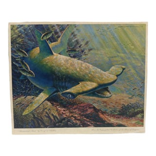 "Vintage ""Hammerhead Shark"" Color Animal Print by George L Schelling Circa 1960 For Sale"