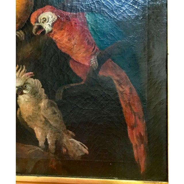 18th Century Jacob Bogdani Follower, Still Life With Parrots Oil on Canvas For Sale - Image 5 of 13