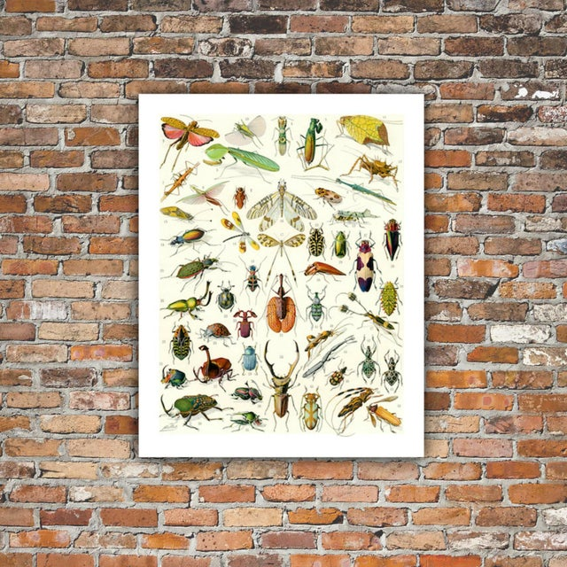 Traditional Vintage 'Bug City' Archival Print For Sale - Image 3 of 4