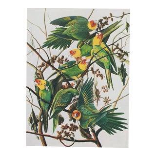 Audubon Carolina Parakeet 1966 Large Lithograph