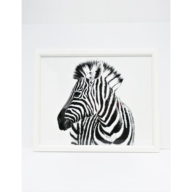 A black and white zebra animal photo print with white handcrafted frame, from London-based gallery, William Stafford,...