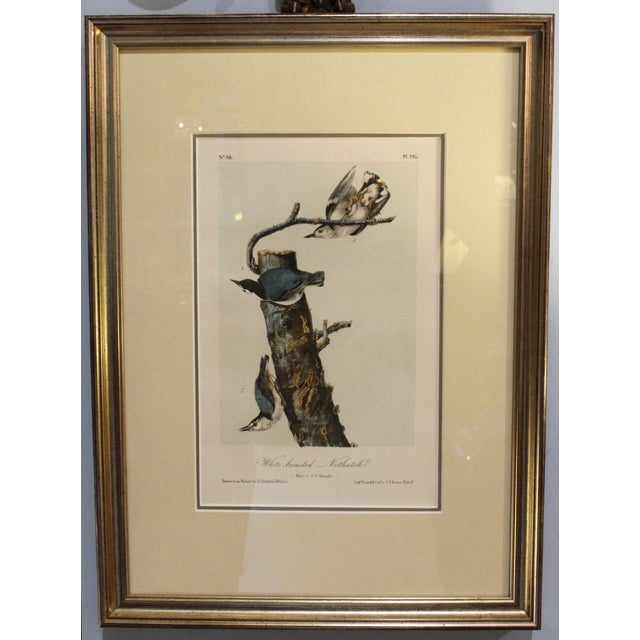Mid 19th Century Mid 19th Century Antique John James Audubon Nuthacth Print For Sale - Image 5 of 5
