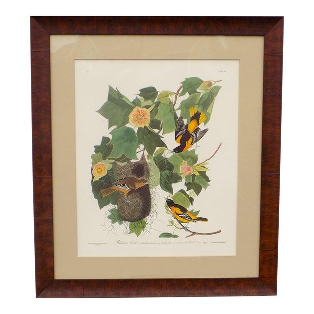 Audubon's Baltimore Orioles Framed Print For Sale