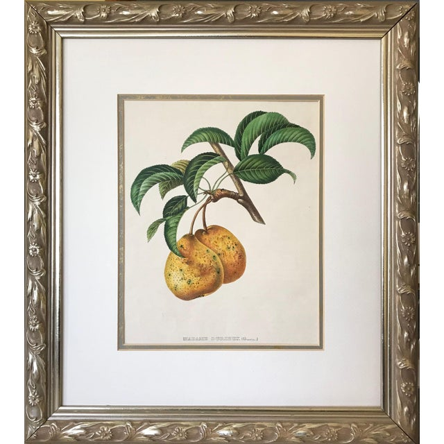 Late 19th Century Antique 19th Century French Lithograph of Pear For Sale - Image 5 of 5