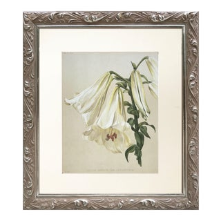 19th Century English Botanical Print of a Lilly 1898 For Sale