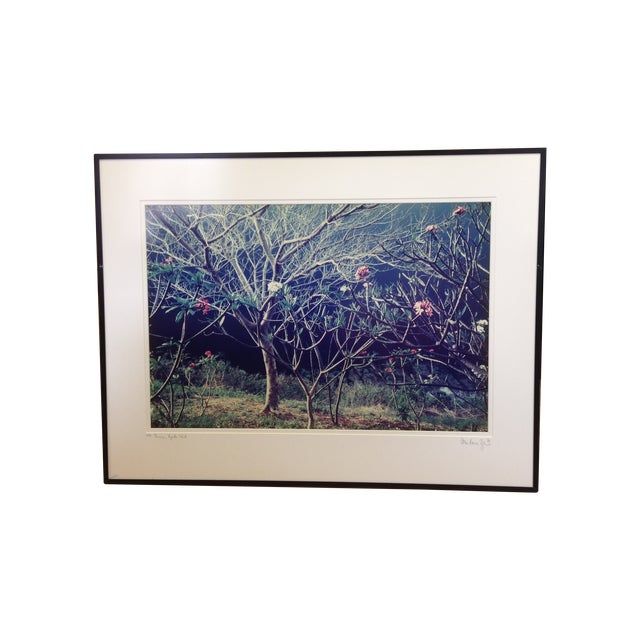 """Plumeria"" Lithograph Signed Allan Bruce Zee '97 - Image 1 of 8"