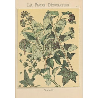 1880s French Art Nouveau Botanical Study Chromolithograph-Araliees For Sale