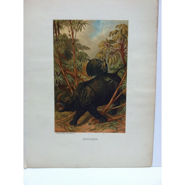 """This is a Vintage Mounted Color Animal Print that is titled """"Rhinoceros"""" from Selmar Hess Publisher in New York. The Print..."""