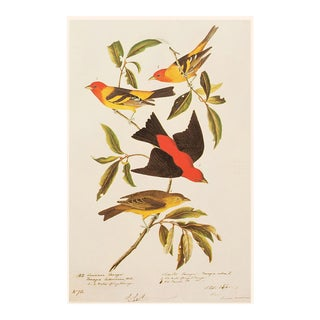 Louisiana and Scarlet Tanagers by Audubon, 1966 American Classical or Chinoiserie Print For Sale