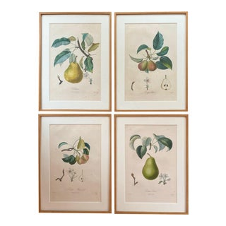 Antique French Hand Colored Stipple Engravings of Pears Framed Prints - Set of 4 For Sale