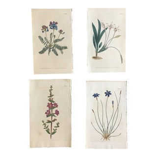 Set of 19th Century Hand-Colored Botanical Engravings For Sale