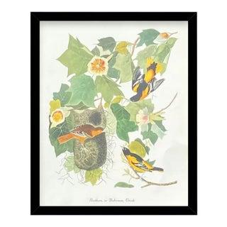 Custom Black Wood Frame of Authentic Vintage John James Audubon Northern or Baltimore Oriole Bird & Botanical Print For Sale