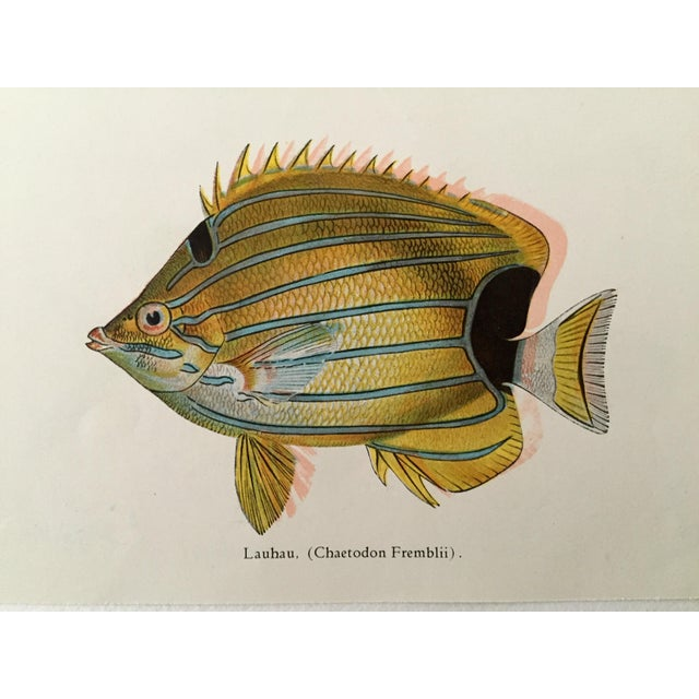 Hawaiian Fish Lithographs - A Pair - Image 5 of 5