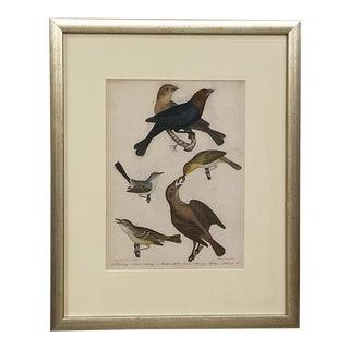 Circa 1810 A. Wilson Bird Engraving, American For Sale
