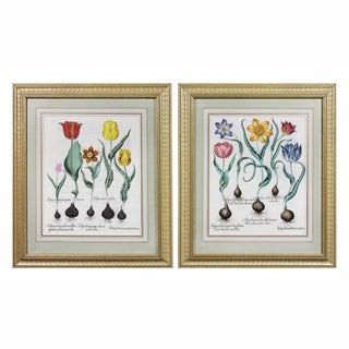 Framed Hand Colored Engravings of Tulips by Basilius Besler - a Pair For Sale