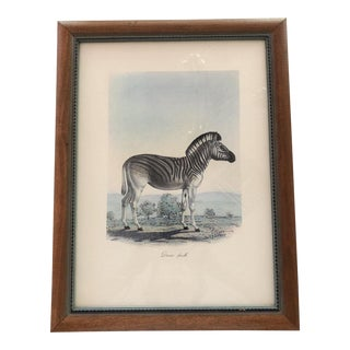 "Frederick Cuvier's ""Animals of Africa"" Collection ""Dauw Femelle"" Lithograph For Sale"
