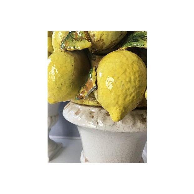 Italian Lemon Topiaries - A Pair For Sale - Image 5 of 5
