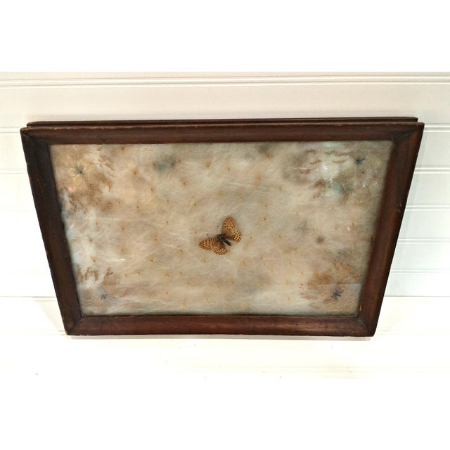 Antique Arts & Crafts Milkweed & Real Butterflies Serving Tray This is an antique hand made serving tray that has real...