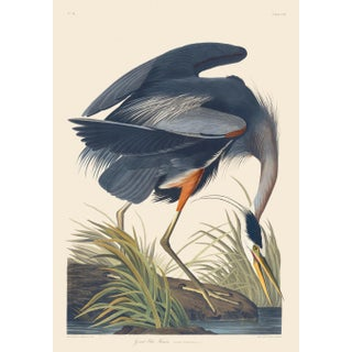 John James Audubon Print, Great Blue Heron For Sale