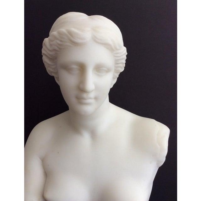 Stone 19th Century Venus De Milo Marble Bust For Sale - Image 7 of 12
