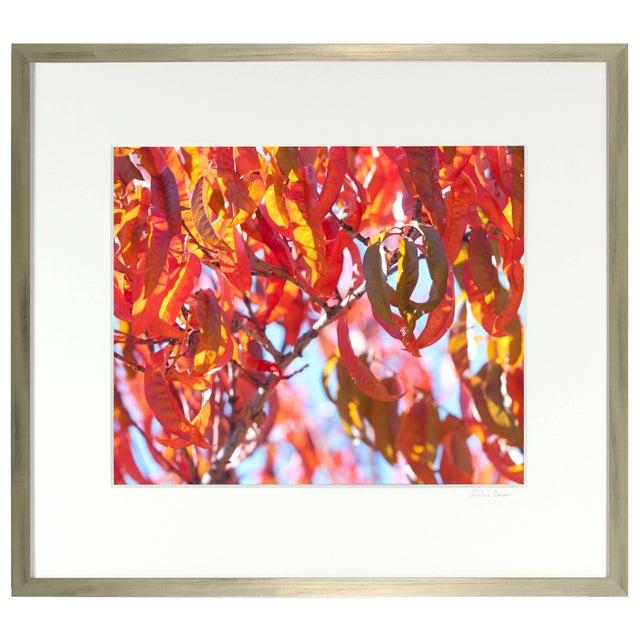 "Gaetan Caron Gaétan Caron ""Early Charlotte (Peach Tree)"" Mendocino Photograph, 2015 2015 For Sale - Image 4 of 5"
