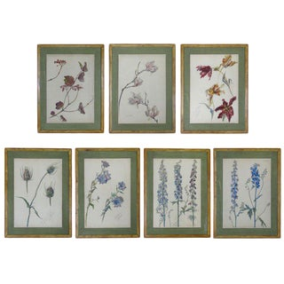 Rare Set of Floral Watercolors by Accard For Sale